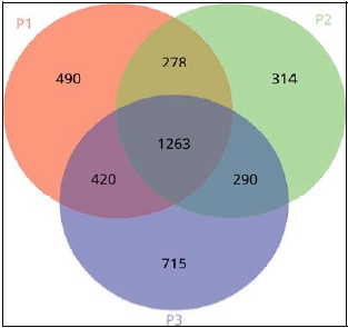 Venn diagram displaying overlaps between genus groups of microbial communities within Tilapia ponds at different Stocking Densities